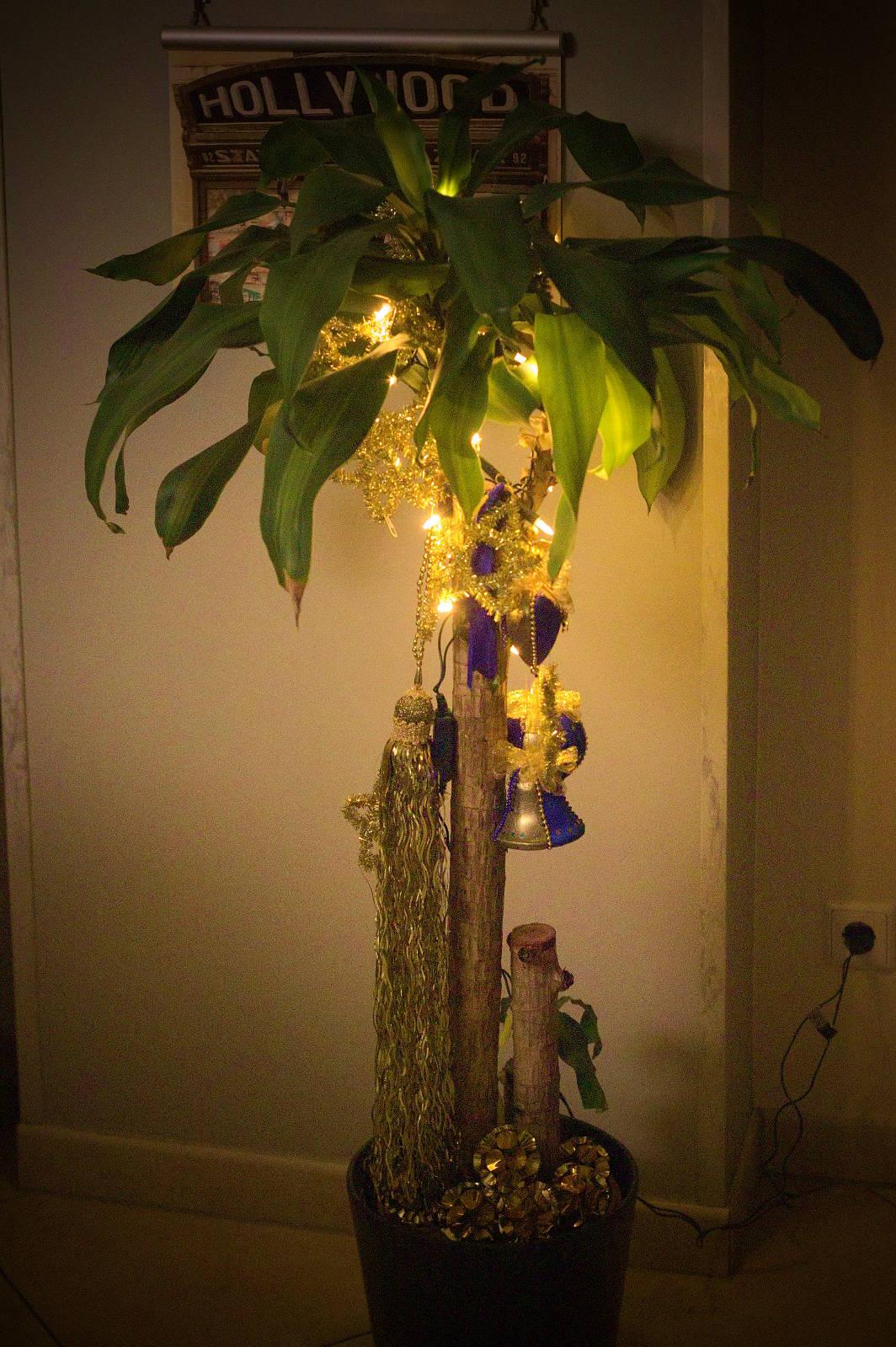 vollnarkose_unterm_palmenbaum